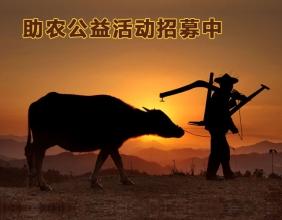 帮助贵州农村无劳动力的家庭犁田、插秧等农活招募中