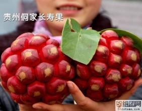 贵州侗族美容长寿之果-布福娜/黑老虎 团购中